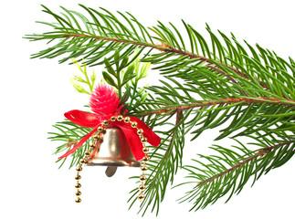 Christmas bluebell