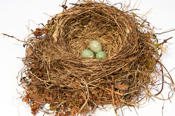 Vogelnest, bird's nest