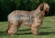 Beautiful dog standing