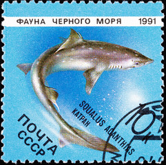 Russian Stamp Swimming Spiny Dogfish Shark Squalus Acanthias