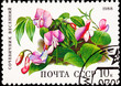 Soviet Russia Stamp Spring Vetchling Lathyrus Vernus Orobus