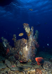 Wreck and underwater life