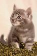 Gattino in attenzione