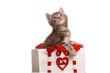 Gattino tigrato nella borsetta bianca