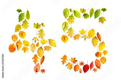 foliage 45 Poster