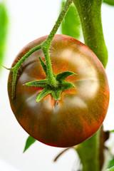 Black Krim -- Ukrainian heirloom tomato