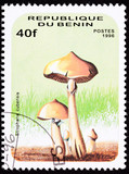 Stamp Psilocybin Psychedelic Mushroom Psilocybe Cubensis Shroom poster