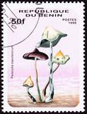 Benin Stamp Psilocybin Psychedelic Mushroom Zapotecorum poster