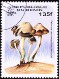 Stamp Psilocybin Psychedelic Mushroom Psilocybe Caerulescens poster