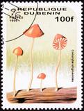 Stamp Umbrella Psychedelic Mushroom, Conocybe Siligineoides poster
