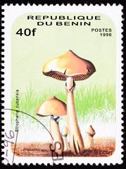 Stamp Psilocybin Psychedelic Mushroom Psilocybe Cubensis Shroom