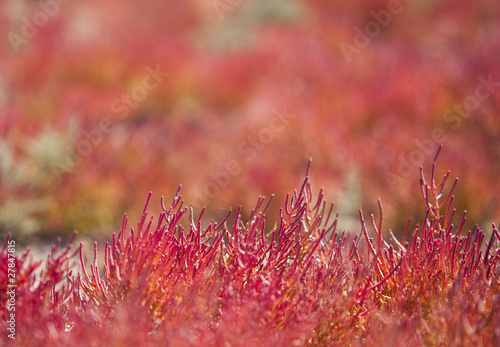 Red vegetation
