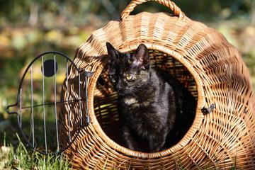 Katze in Transportkorb