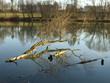 Baum im See - spiegelt sich im Wasser