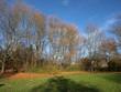 Park im Herbst - Bäume mit Wiese