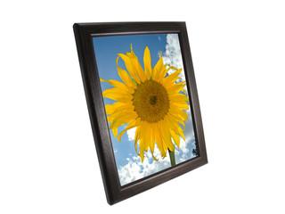 sunflower in a frame