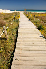 Camino a la playa. Formentera