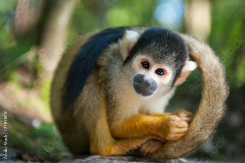 Aluminium Eekhoorn cute squirrel monkey