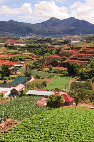 Vietnam Farmland Portrait