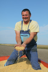 Soybean harvest, farmer holding soy at trailer