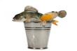 Successful fishing!