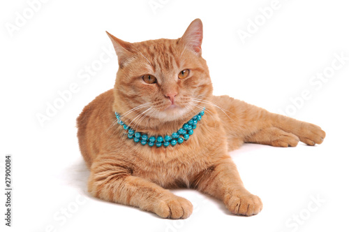 Fotobehang Dragen Cat in Beads