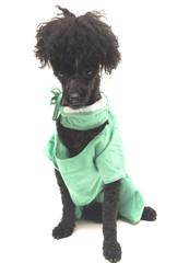 Doctor Doggie