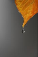 gota de agua a punto de caer de una hoja en otoño