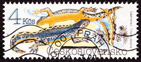 Czechoslovakian Stamp Orange Alpine Newt Ichthyosaura Alpestris