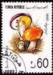 Yemeni Postage Stamp Clump Slippery Jack Mushroom Suillus Luteus