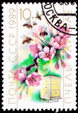 Soviet Stamp Cherry Blossom Bee Hive Cultivation Pollination poster