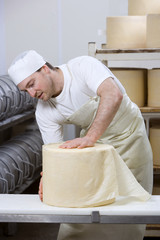 Cheese maker binding new farmhouse cheddar cheese wheel with cheesecloth