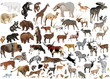 huge collection of color animals