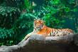 Quadro Tiger