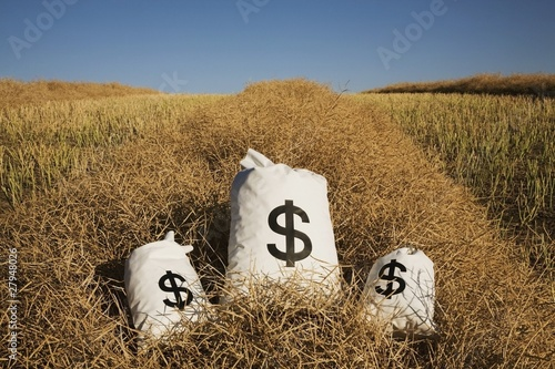 bags of money on a farm field