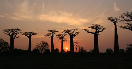 Baobab Allee Madagaskar
