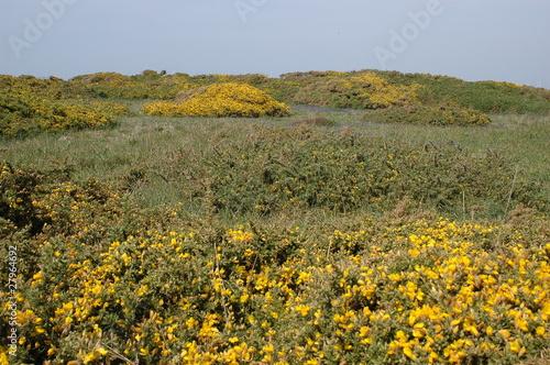 paysage de l'ile de batz