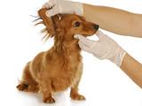 veterinary examination poster