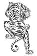 Shaded Asian Tiger - 27971259