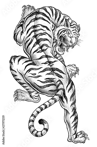Shaded Asian Tiger