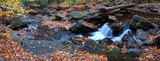 creek closeup with yellow maple trees panorama