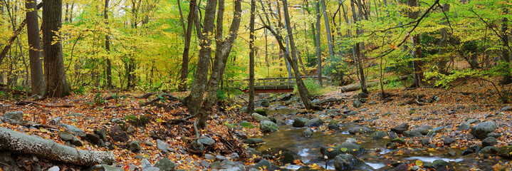 Autumn forest wood bridge panorama over creek