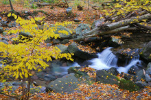 Herfst kreek met gele maple bomen
