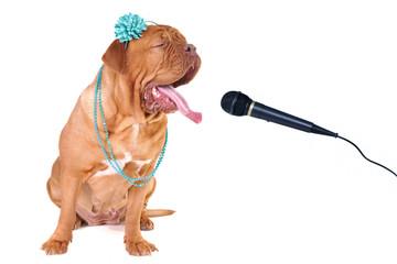 Big Glamour Dog Singing out Loud