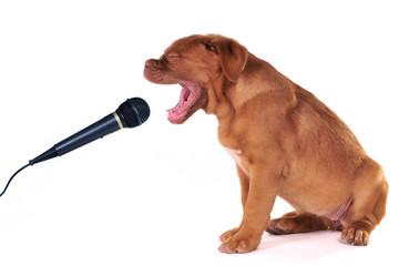 Puppy Singing