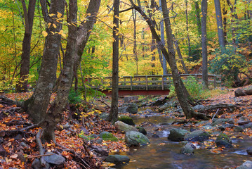 Autumn wood bridge in yellow maple forest