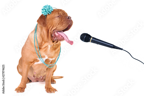 Big Glamour Dog Singing out Loud
