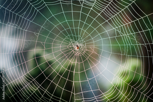 Spiral orb web with a spider - 27975608