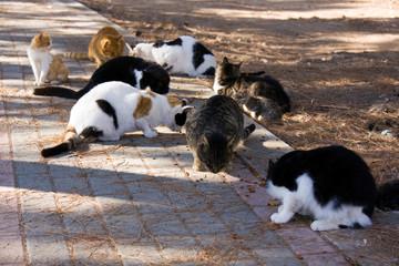 Katzen beim Essen