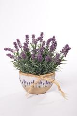 Lavender in flowerpot